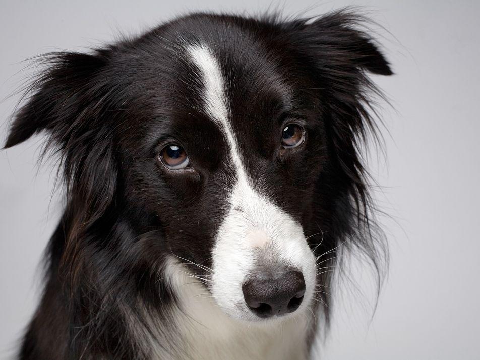 So gut können Hunde uns einschätzen