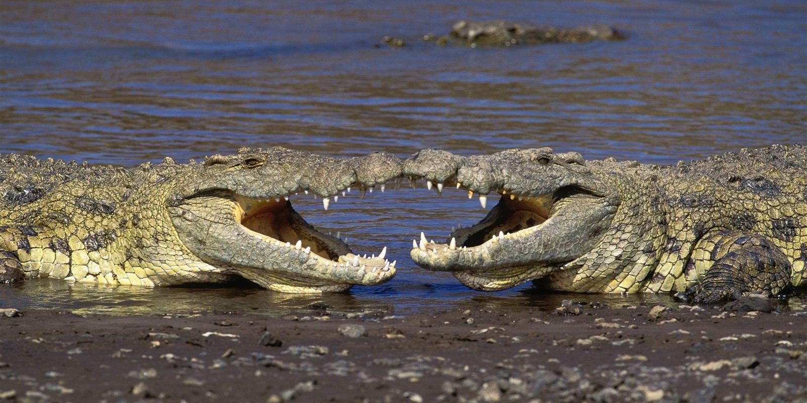 Wenn Krokodile spielen – Warum haben Tiere Spaß?