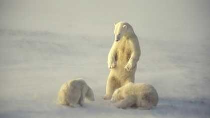 Galerie: Antworten auf eure Fragen zum Video des verhungernden Eisbären