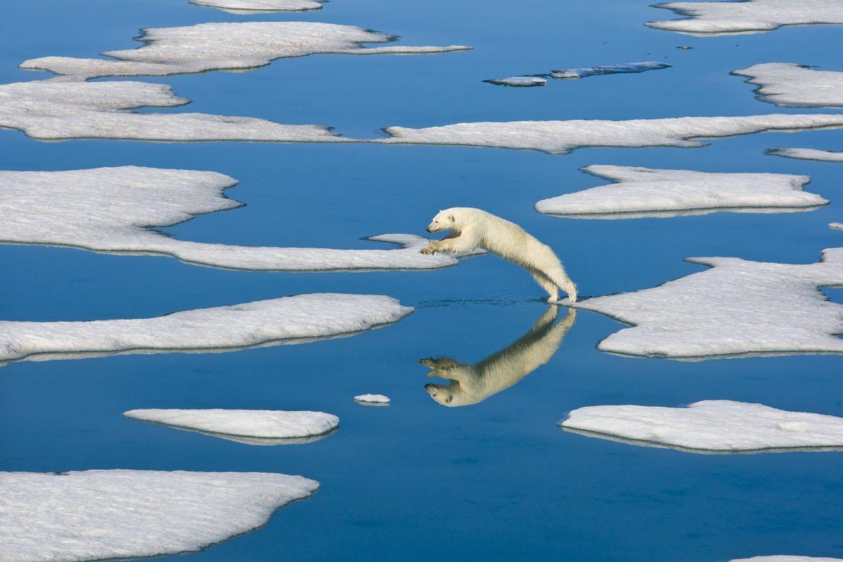 Ein Eisbär springt 2010 vor der Insel Spitzbergen in Norwegen zwischen Eisschollen umher.
