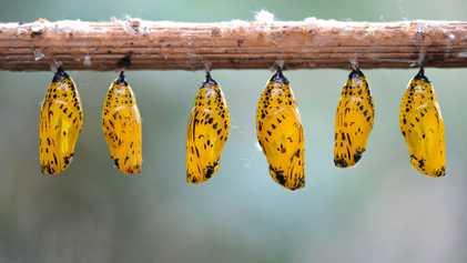 Zwischen Farbpracht & Camouflage: Schmetterlingsfarben entschlüsselt