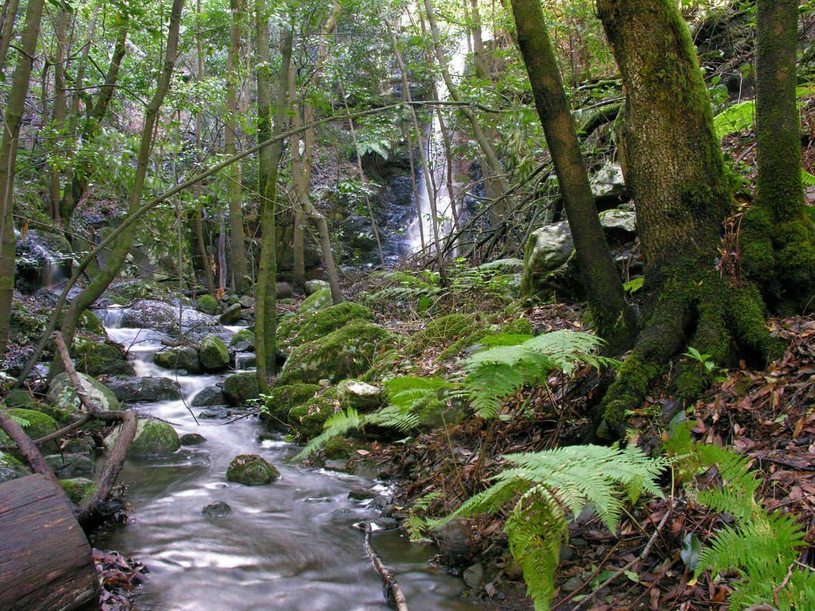 Wasserfall und Bach im Märchenwald: der Bach Cedro im Garajonay Nationalpark.