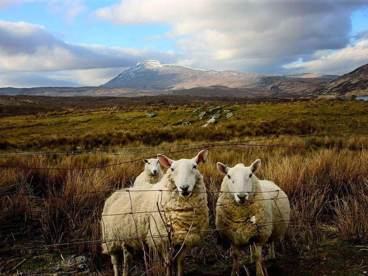 Galerie: Der verlorene Whisky: Schottland belebt eine alte Tradition wieder