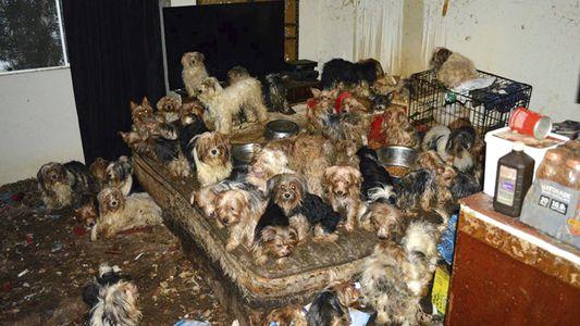Wenn Tierliebe zur Sucht wird – Animal Hoarding nimmt zu