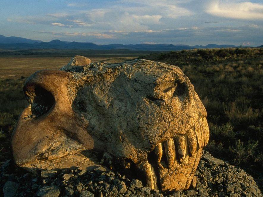 Vor 250 Millionen Jahren, lange bevor Dinosaurier oder Säugetiere die Erde bevölkerten, durchstreifte der mittelgroße Räuber ...