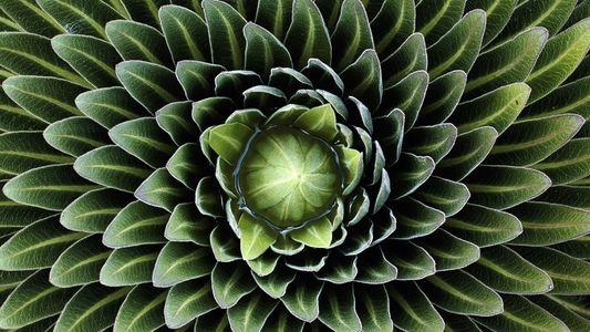 Galerie: Die floralen Muster der Natur