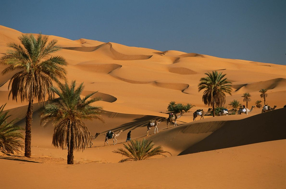 Dünen und Palmen der Sahara