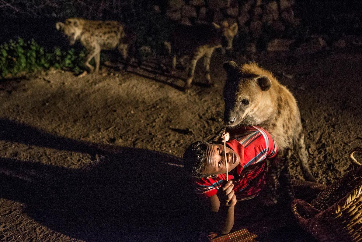 Mann füttert Hyäne aus der Hand