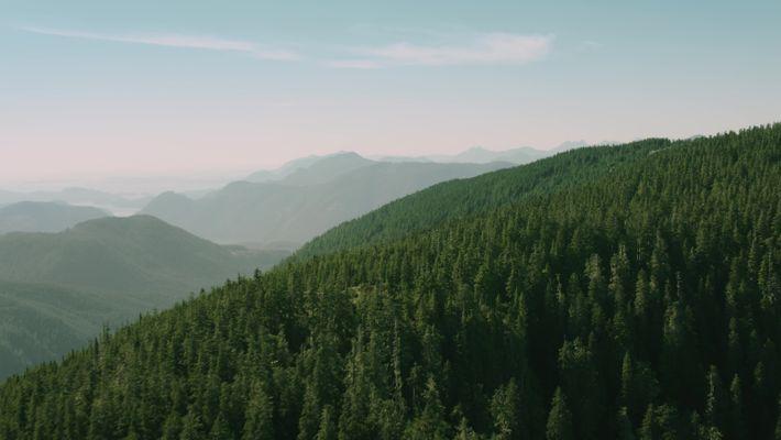 British Columbia: Wege durch den Wald