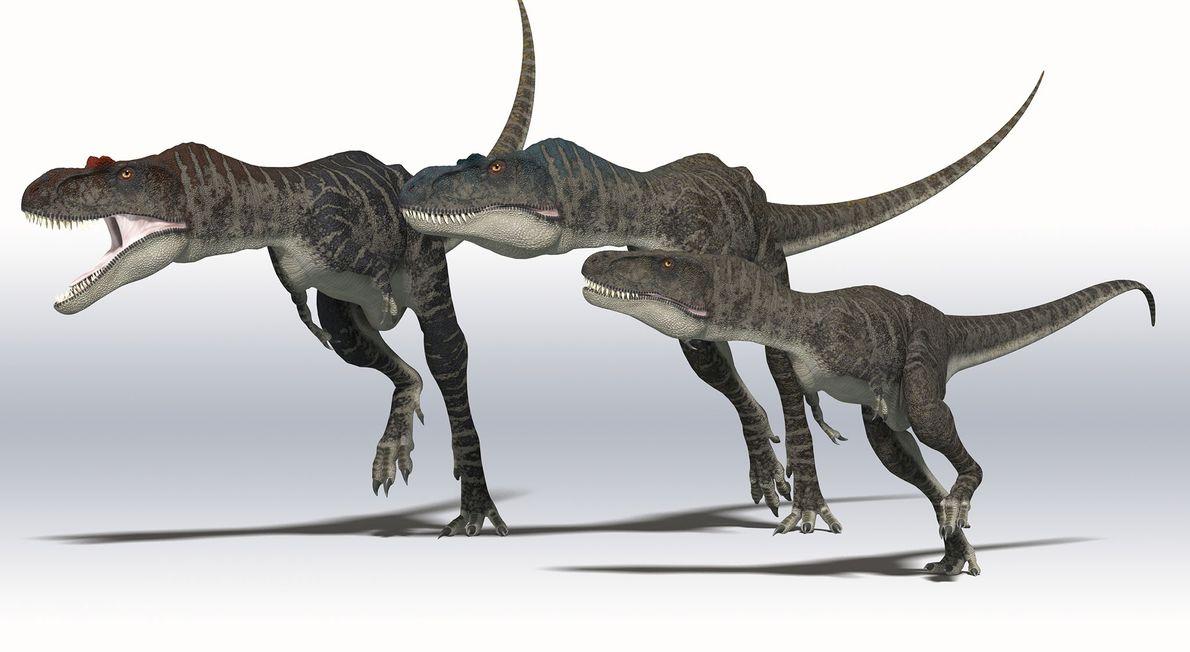 Eine Illustration eines Albertosaurus – einer der größten Tyrannosaurier, die in der Studie untersucht wurden.