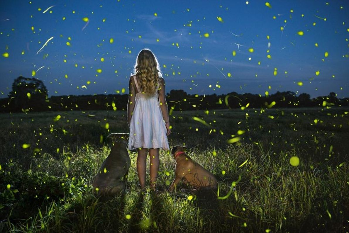 An einem warmen Sommerabend sind Mensch und Tier gleichermaßen von dem leuchtenden Spektakel der Glühwürmchen fasziniert. ...