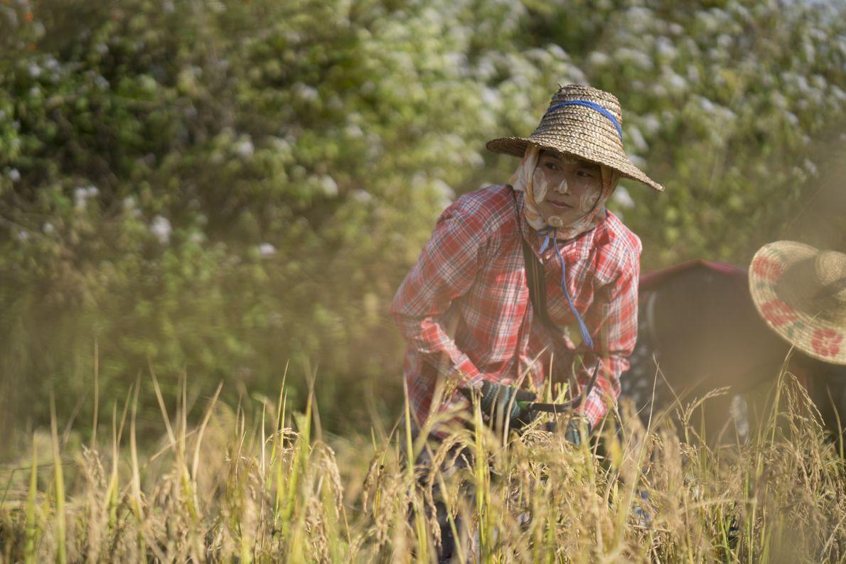 Eine Arbeiterin auf dem Reisfeld
