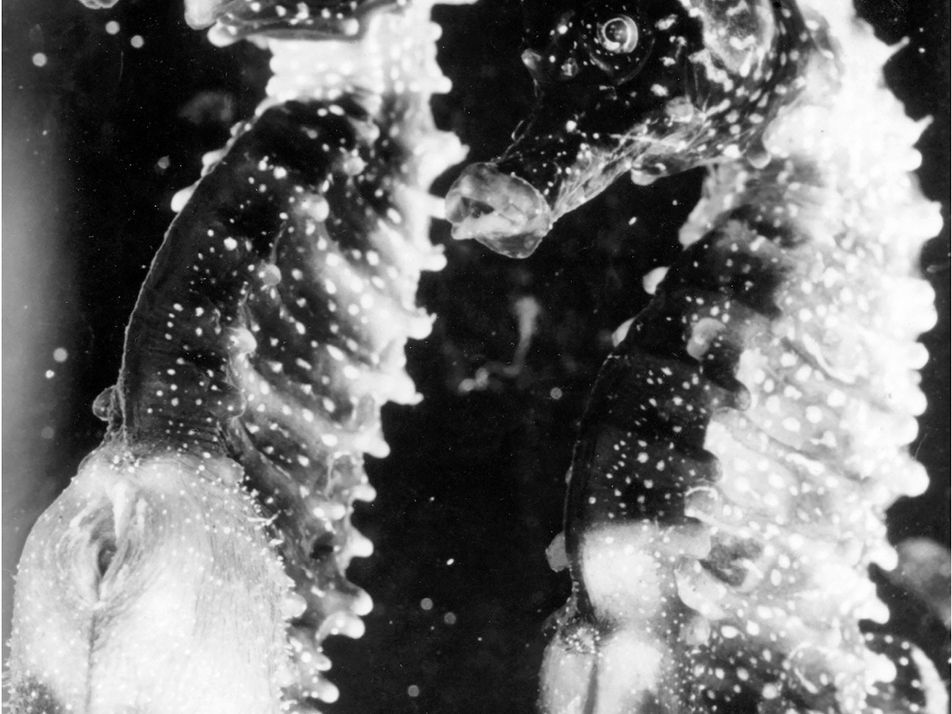 Vintage-Fotos von Meerestieren aus den 1920ern