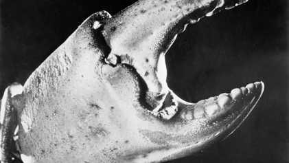 Vintage-Fotos von Meerestieren aus den 1920ern - 2