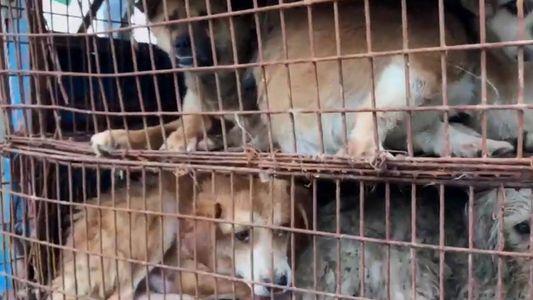 Die kontroverse Geschichte von Hundefleisch, von der Antike bis zu den Olympischen Winterspielen