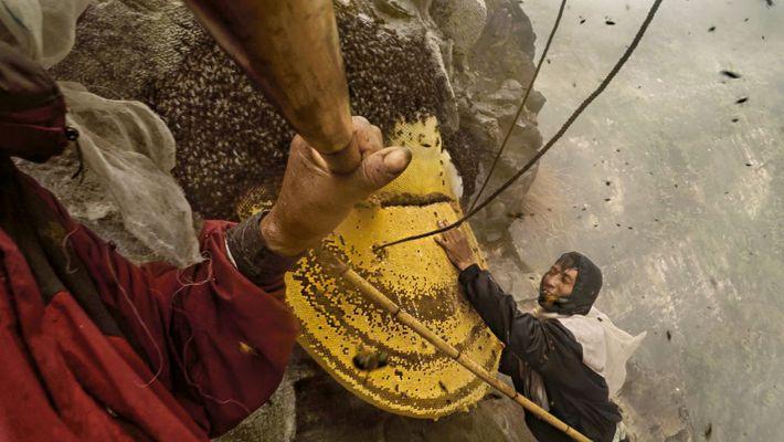 Honigjäger in Nepal