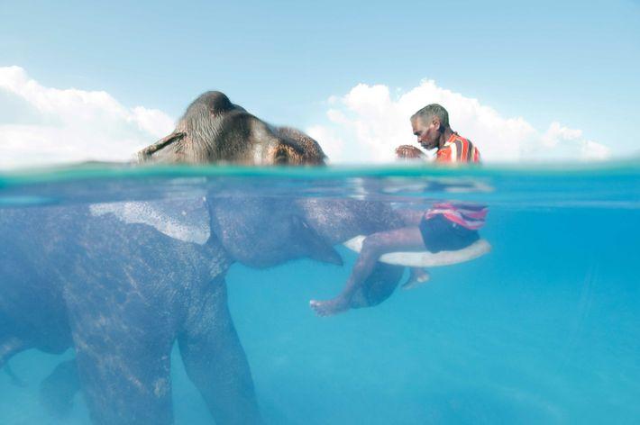 Elefant mit Treiber