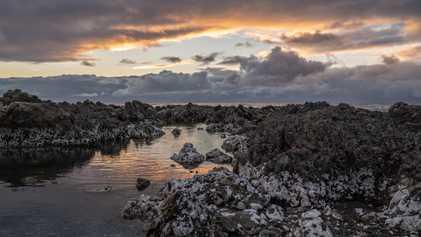 Galerie: Natur hautnah: Kaikōuras wilde Küsten