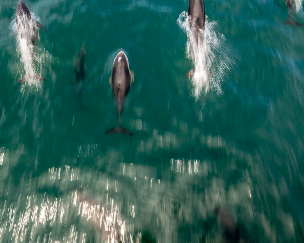 Besucher können Kaikōuras Tierwelt hautnah erleben. Man kann mit Delfinen schwimmen, Wale beobachten oder Kajakfahren. ...