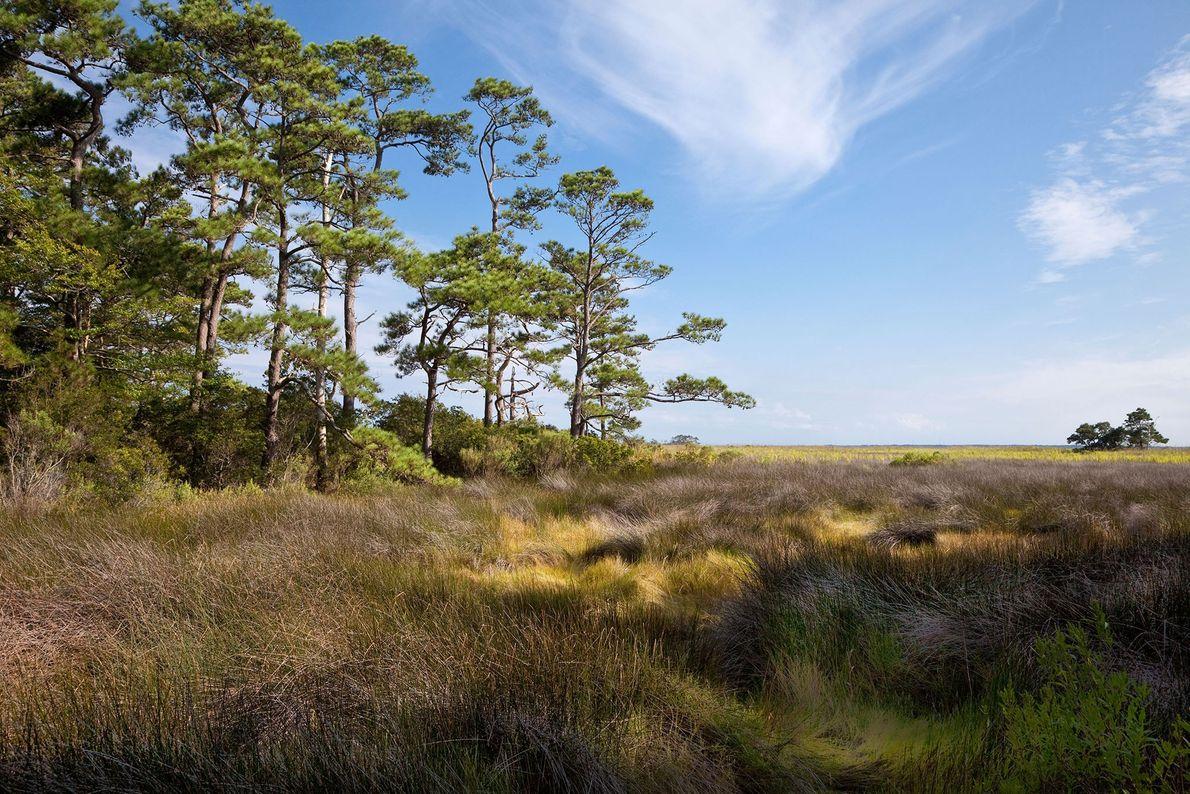 Foto von einer Szenerie entlang des Roanoke Trail in Nags Head, North Carolina