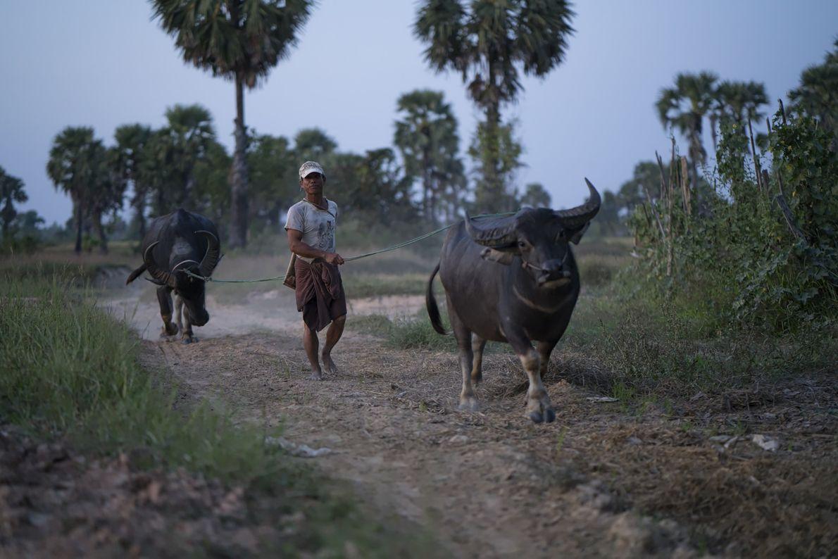 Bauer mit Tieren