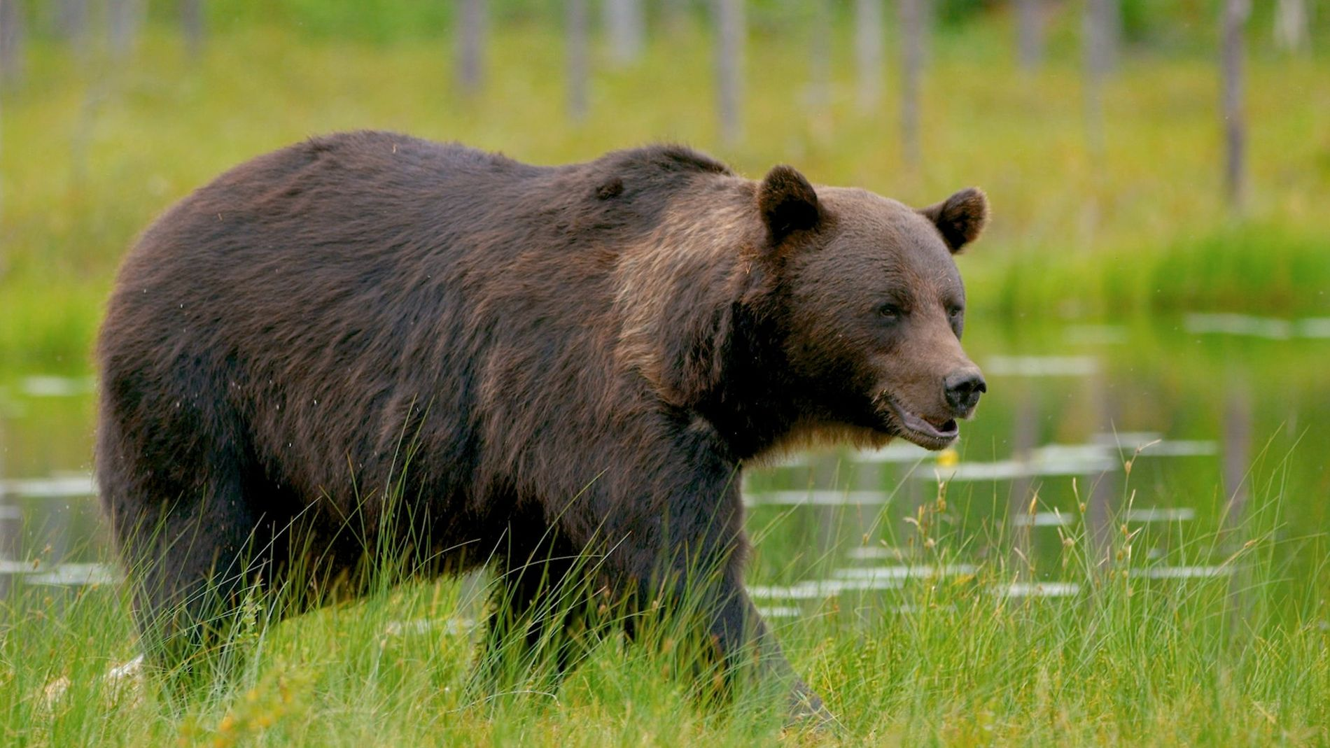 Wissen kompakt: Bären