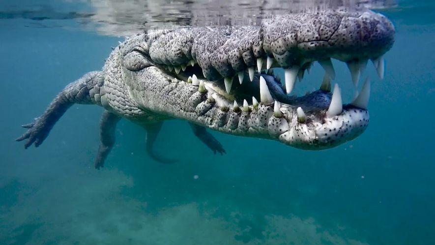 Behind the Scenes of a Close Crocodile Encounter_DE