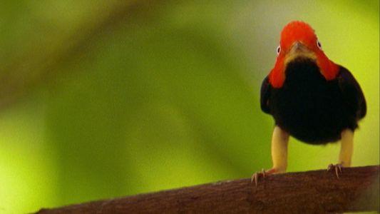 Heiße Moves: Vogelbalz mit Moonwalk