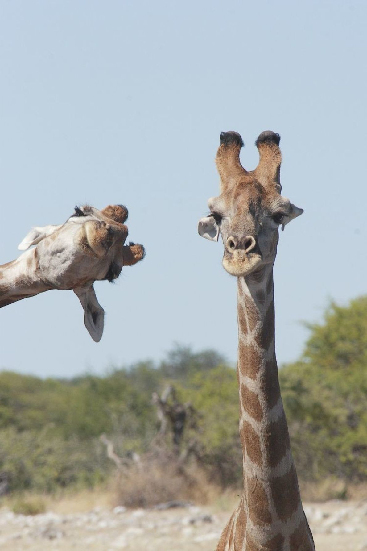 """Crashing into the Picture"" 