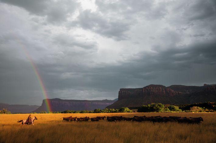 """""""Es ist eine vielfältige, ikonische, manche sagen: spirituelle Landschaft."""" So beschreibt Viehzüchter Matt Redd jenes Stück ..."""