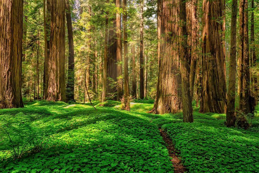 Der Humboldt Redwoods State Park liegt im Norden der kalifornischen Pazifikküste.