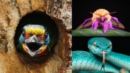 42 der farbenprächtigsten Tiere der Welt