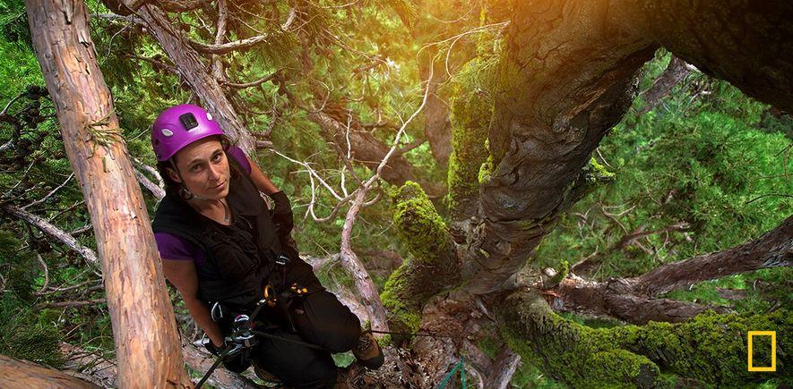 360° Video: Klettern auf Giganten