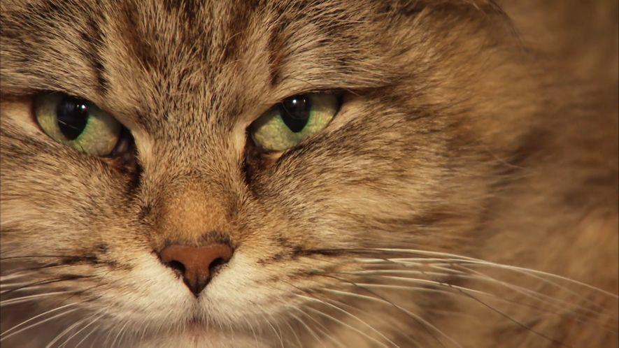 NG feiert den Weltkatzentag
