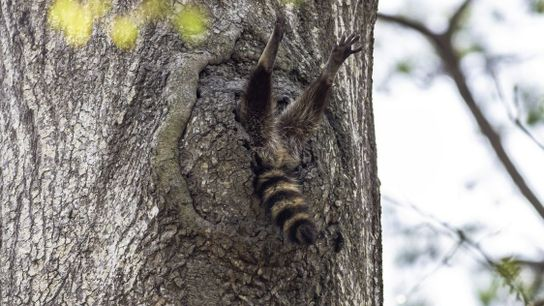 """""""Almost Time to Get Up"""" 