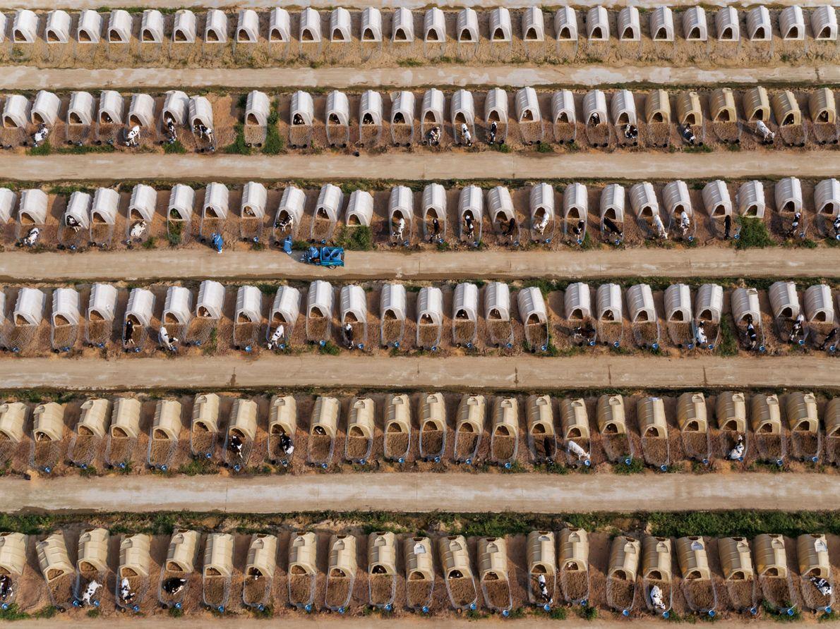 Kälberhütten von Modern Farming in der Provinz Anhui
