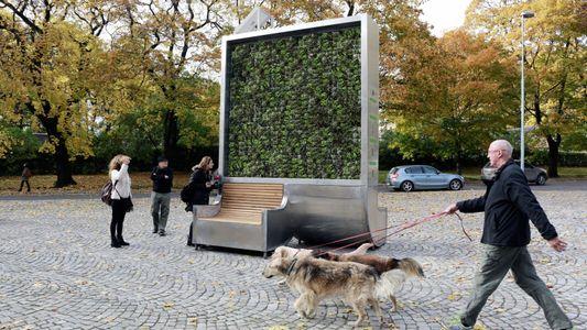 Wie ein flacher Baum aus Moos die Stadtluft verbessert