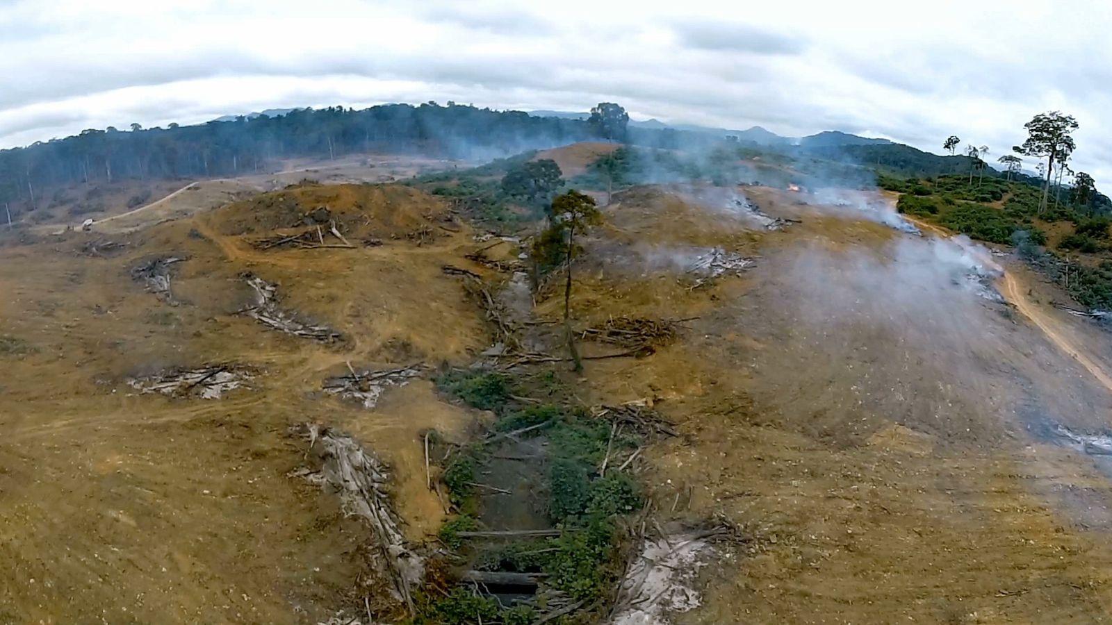 Wissen kompakt: Entwaldung