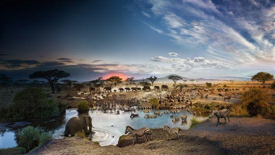 Seronera, Serengeti-Nationalpark, Tansania | Fotograf Stephen Wilkes und sein Assistent verbringen 30 Stunden am Stück auf ...