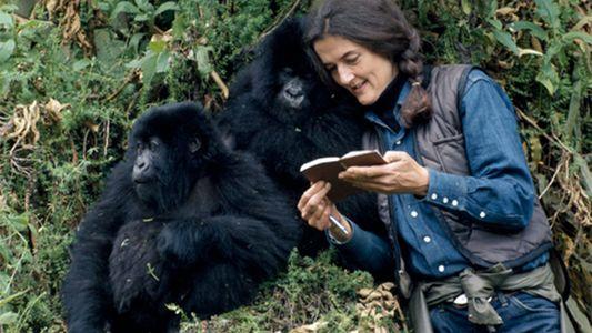 Helden des Artenschutzes: Dian Fossey