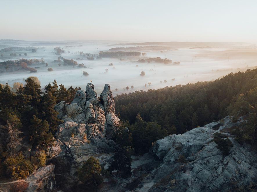 Wildnis vor der Haustür: Ein Streifzug durch die Wälder im Harz