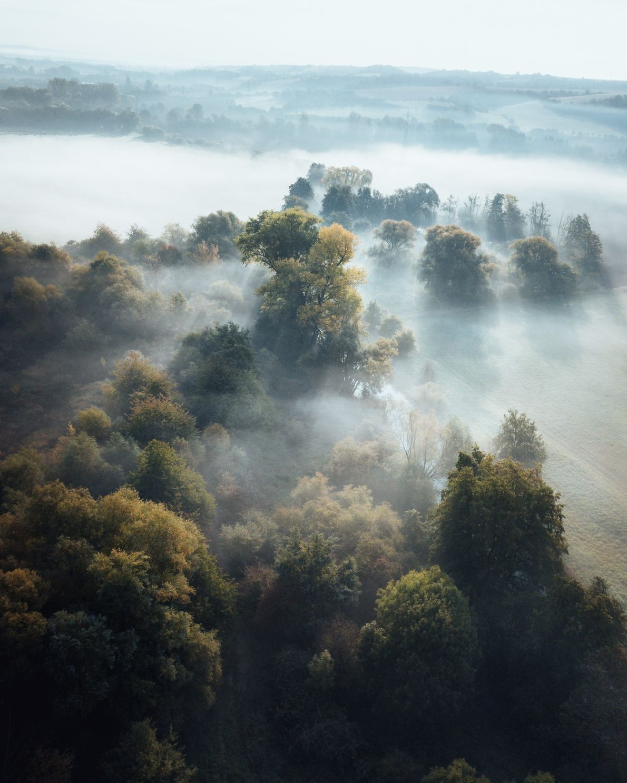 Licht und Nebel erzeugen eine stimmungsvolle Atmosphäre in den Wäldern des Harz, die auf diesem Bild …