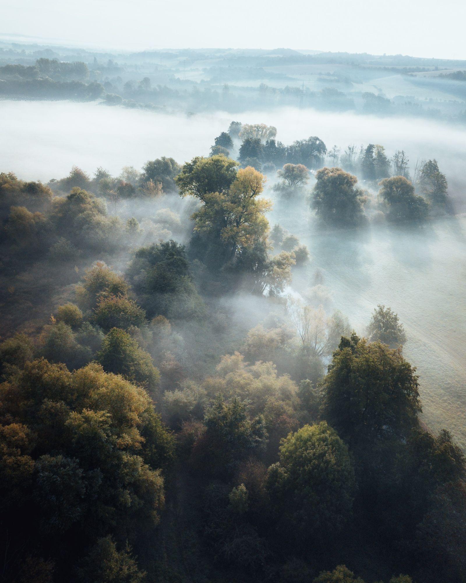 Galerie: Ein Streifzug durch die Wälder im Harz