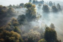 Wald im Harz mit Nebel