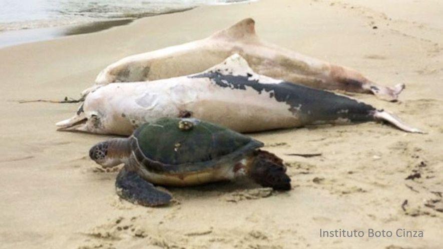 Hunderte tote Delfine stellen Wissenschaftler vor ein Rätsel