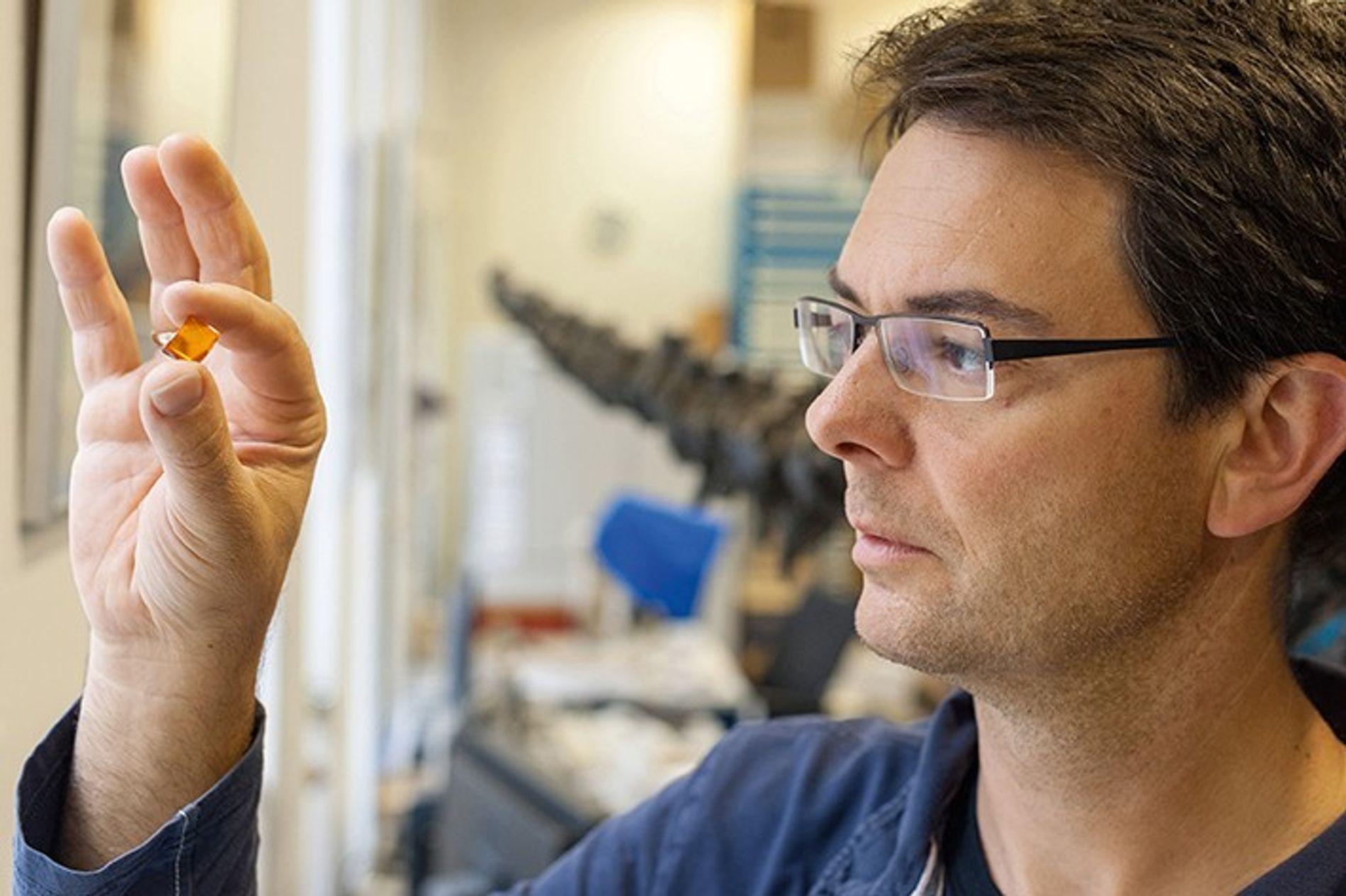 Jens Lehmann, Leiter der Geowissenschaftlichen Sammlung der Uni Bremen, inspiziert einen Bernstein.