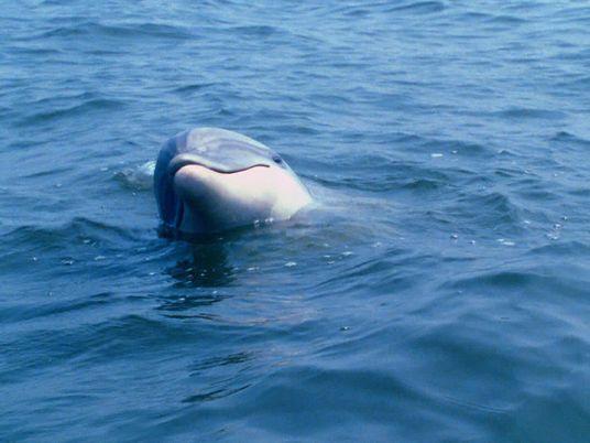 Crashkurs in Delfinkommunikation