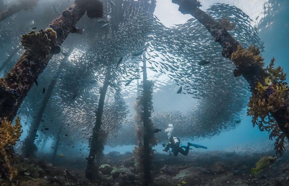 Fische unterm Pier