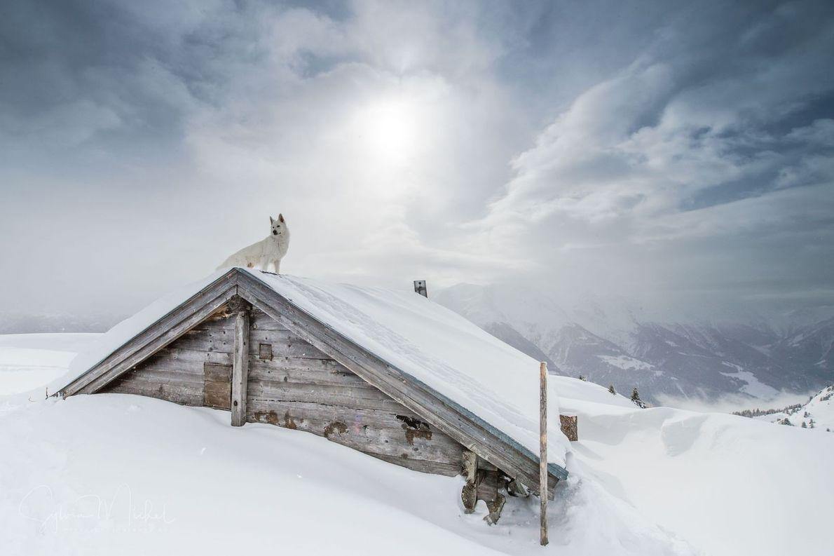 Hund auf Dach einer Hütte