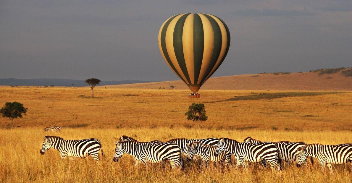 Heißluftballon hinter Zebras